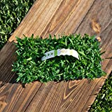 SodPods St Augustine Seville Grass Plugs (32-Count) Natural, Affordable Lawn Improvement