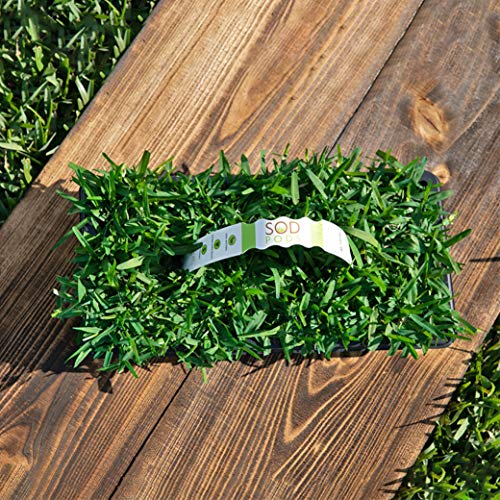 SodPods St Augustine Seville Grass Plugs (64-Count) Natural, Affordable Lawn Improvement