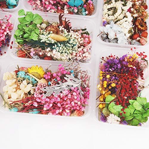 DRI Flor Seca 1 Caja de más de 8 Estilos de Flores Mixtas para Suprimir Plantas marchitas para Hacer Accesorios de Bricolaje para decoración de Fiestas