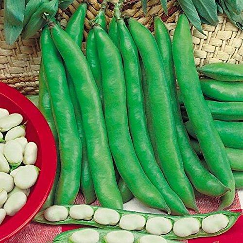 tomgarten Puffbohnen 'Dreifach Weiße' |Saatgut | Zarter Geschmack | 6 Meter Saatreihe