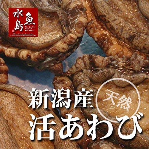 魚水島 新潟県産 天然 活アワビ・あわび 5個