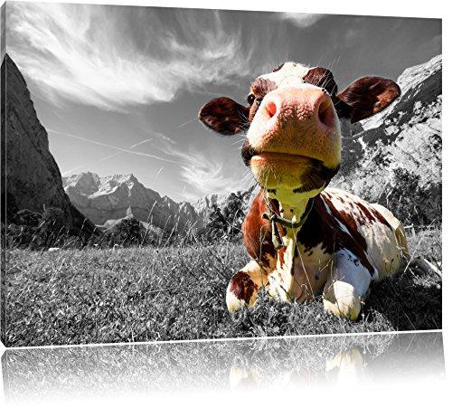Pixxprint Kuh im Karwendelgebirge als Leinwandbild | Größe: 60x40 cm | Wandbild | Kunstdruck | fertig bespannt