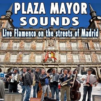 Plaza Mayor Music. Live Flamenco On the Streets of Madrid
