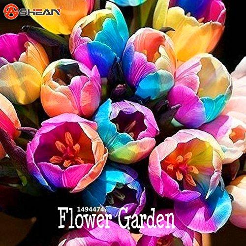 Big Sale, graines Tulip, fleurs de tulipes, de belles tulipe 19 variétés peuvent choisir -10 graines / paquet, # 8N2432