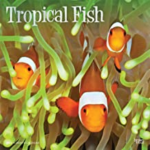 Tropical Fish 2020 12 x 12 Inch Monthly Square Wall Calendar with Foil Stamped Cover, Animals Marine Wildlife Fish