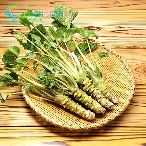 Semillas del Paquete: 50pcs / Lot Wasabi Semillas Japonesa Bonsai Caballo Vegetal de Semillas de Bricolaje para el hogar Bonsai Garden Semillas Semillas Raras y Frescas po