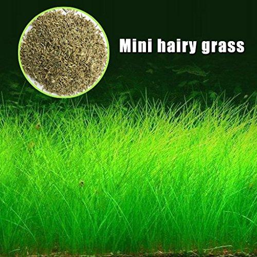 Daxibb semi di piante acquatiche acqua erba acquario Decor Garden Plant in primo piano, Mini hariy grass
