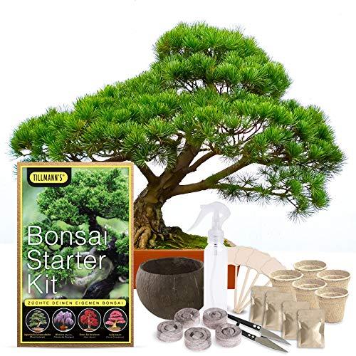 Bonsai Starter Kit von Tillmann´s, Komplettes Starter Anzucht-Set, Züchte deinen eigenen Bonsai