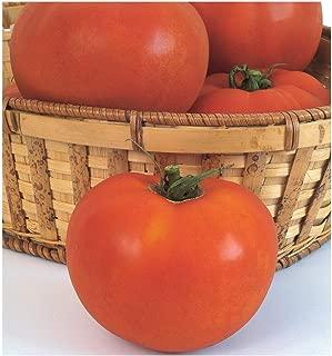 David's Garden Seeds Tomato Beefsteak Celebrity 7332 (Red) 25 Non-GMO, Hybrid Seeds