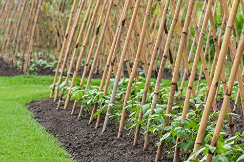 Pflanzenfuchs® Bambusrohr Tonkinstäbe Bambusstäbe - Verschiedene Größen - 10er Pack (120cm x Ø 12-14 mm)