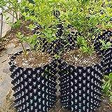 Olla de raíz de aire, contenedor de poda de aire, plantadores de propagación portátiles para plantas de raíz, para flores, verduras, árboles, árboles y árboles de increíble rendimiento hidropónicos