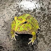 【生体】(両生類)クランウェルツノガエル グリーン(約3-5cm)(1匹) カエル emuwai