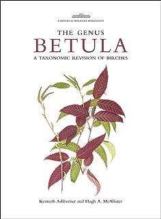 Best betula online shop Reviews