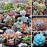 2016 Plantas Limited Promoción exterior Sementes 20 / bolsa Mix Semillas de plantas suculentas...