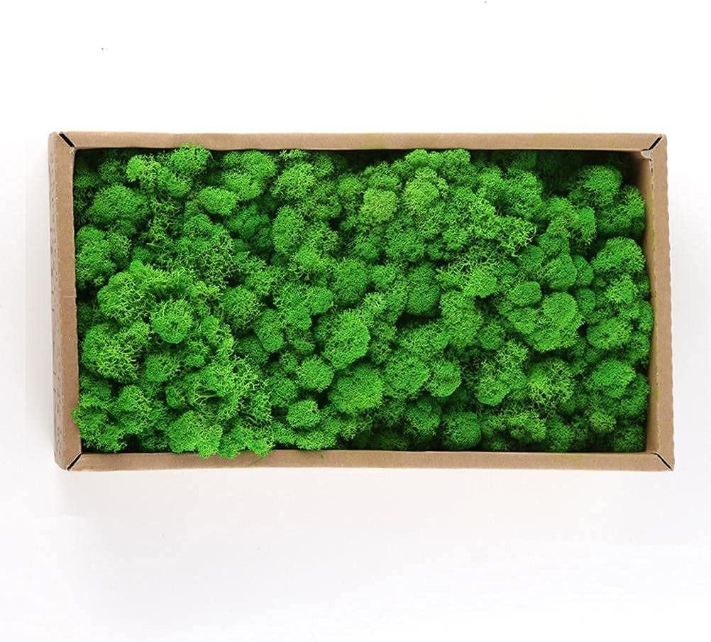 bottl Moss Preserved Limited Special Price Roc New life Artificial Reindeer