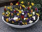 Balkonkästen und Pflanzschalen mit Frühjahrsblühern