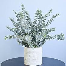 Arranjo de Eucaliptos Artificiais Toque Real no Vaso Branco de Cerâmica   Linha Permanente Formosinha