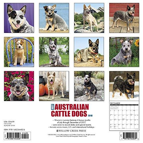 Just Australian Cattle Dogs 2018 Calendar