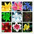 ADB Inc 25 Type Lily Seeds Mixing Different Varieties 200pcs Yellow White Red Pink Purple