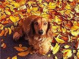 Pintura de diamante Kit completo de otoño 5D bordado de diamantes de imitación decoración de casa de campo imagen de perro pintura de diamante A1 45x60cm