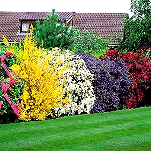 Flowering Shrubs Hedge - 5 hedge plants (AMAZON)