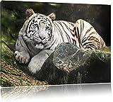 Weisser Tiger, USA Bild auf Leinwand, XXL riesige Bilder