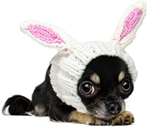 Best bunny costume for dogs