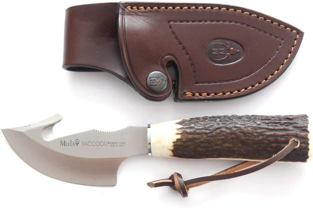 Muela RACCOON-8A Hunting Knife with 8cm MoVa Stainless Steel Blade and Deer Antler Grip for Hunting, Fishing, Survival and Bushcraft + Gift Bottle Holder