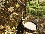 Mesoamerican Plants, Cuisine, and Medicine