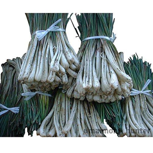 沖縄産島らっきょう 1kg ローカロリー 栄養満点 スーパーフード 沖縄土産