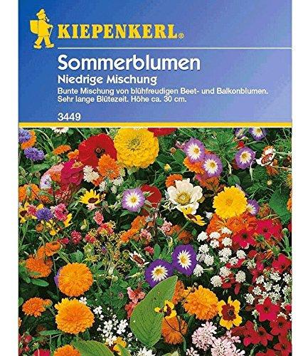 Bruno Nebelung GmbH Niedriger Sommerblumen-Mix, 1 Tüte Samen