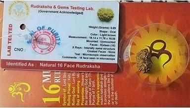 16 Mukhi Certified Rudraksha (Indonesian Java)