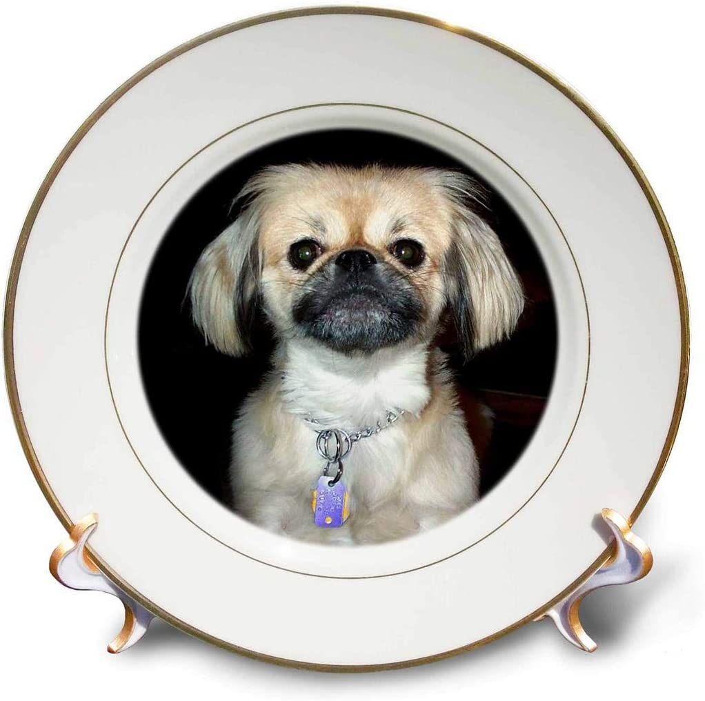 3dRose Max 75% OFF cp_1057_1 Pekingese-Porcelain High quality Plate 8-Inch