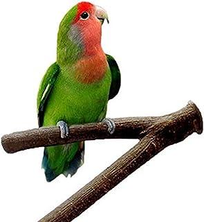 Amazon.es: pico loro - Juguetes / Pájaros: Productos para mascotas