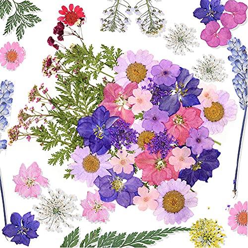 Flores Secas, 35 Piezas de Hojas de Flores Naturales, Flores Secas para Resina, Prensadas para Joyería Decorativa, Hojas de Flores Secas, para Velas de Bricolaje, Albumes de Recortes, Colgantes