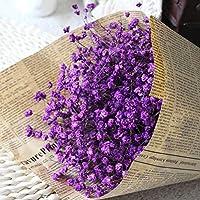 WDOIT - Ramo de flores secas naturales gipsófila, para manualidades, decoración de casa, jardín, boda, fiesta, Morado, 40*20CM