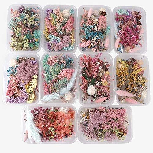 OYPY 1 Box Natur Getrocknete Blumen Trockene Pflanzen for Aromatherapie Kerze Anhänger Schmuck Scrapbooking DIY handgemachte Fertigkeit-Zubehör (Farbe : Random Color)