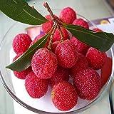 10 PC / bolso Semillas de madroño madroño china deliciosa fruta para la sana y Home Garden Grow Fácil