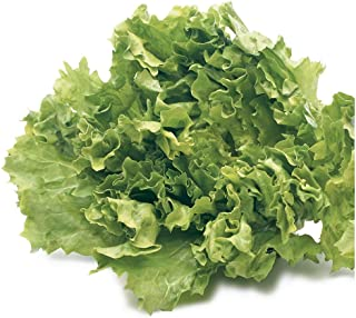 organic escarole seeds