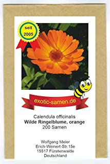 Orange Ringelblume Wildform - ungefüllt - Calendula officinalis - Bienenweide - Heilpflanze - 200 Samen