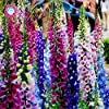 100pcs/bag comune Foxglove Flower Bonsai Semi 100% veri semi di Digitalis Purpurea domestico fiore giardino in vaso pianta facile da coltivare 7 #1