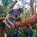 FJKEFJH Kits de Punto de Cruz Contado,Bebé koala 40X50cm 14CT Conjunto de Kit de Punto de Cruz de Bordado DIY Tela a Mano Hilos de Color Dibujo de Aguja de paño de algodón