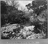 HistoricalFindings Photo: Scene on San Mateo Creek,San Mateo County,California,CA,1866,Water,Trees