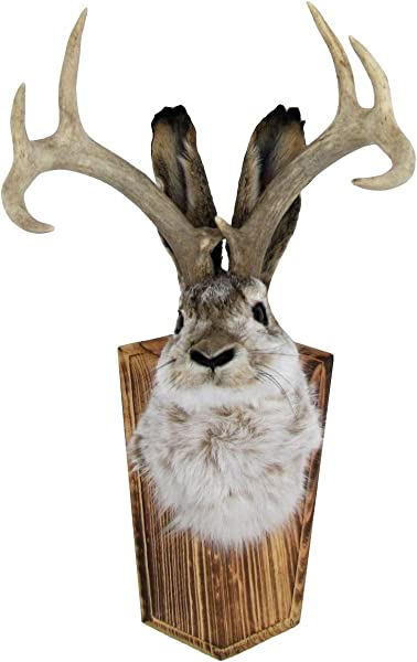 TreasureGurus LLC Genuine Taxidermy Life Size Adult Jackalope Rabbit Head Mount With 8 Pt Horns