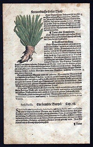 Stechwinden Sarsaparille herbal Kräuter Kräuterbuch Lonicer Holzschnitt