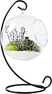 Mkono Clear Glass Vase Hanging Plant Terrarium with Black Metal Stand Tabletop Display Potted Stand for Air Plants Succelent Home Office Decor, C-Shape, 1 Globe