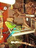 Sitzbrett mit Kokosschale Futternapf zum Herausnehmen - 9