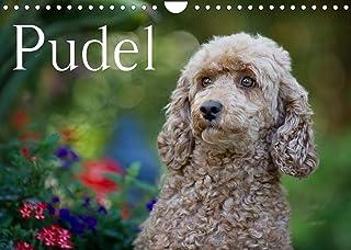 Pudel (Wandkalender 2022 DIN A4 quer): Ein bunter Pudel-Kalender für das ganze Jahr (Monatskalender, 14 Seiten )
