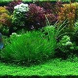 Sisaki 100pcs / sac Mélange Herbe D'eau Graines Aquarium Accueil Fish Tank Plant Decor Graines