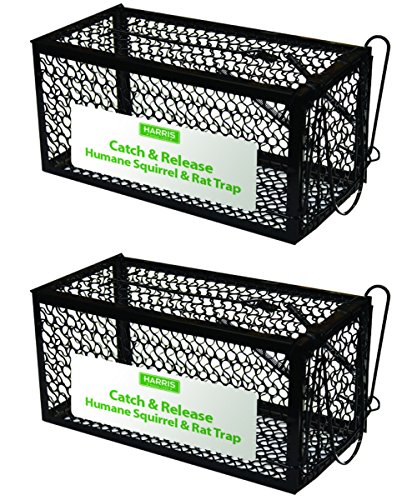 Harris Catch and Release Humane Cage Trap for Rats, Chipmunks, and Small Squirrels (2-Pack)
